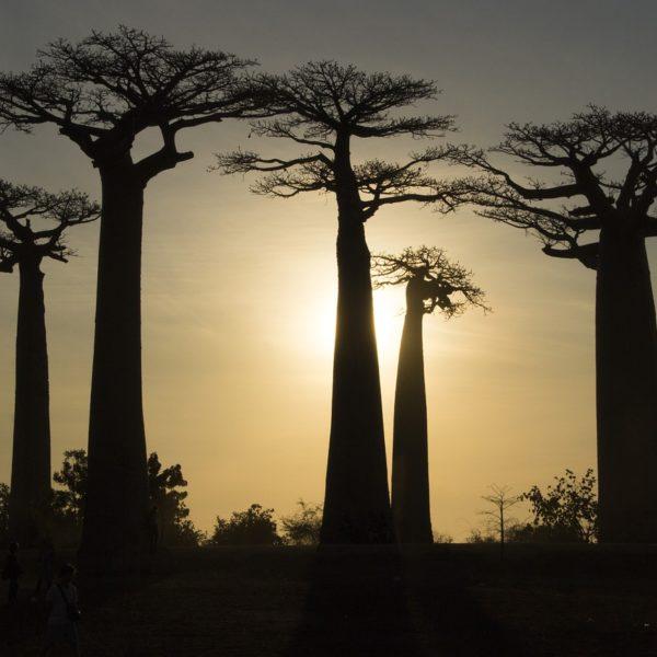 Madagascar: cosa fare,dove alloggiare,quando andare